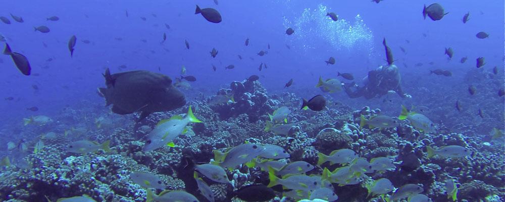 les plongées à fakarava nord