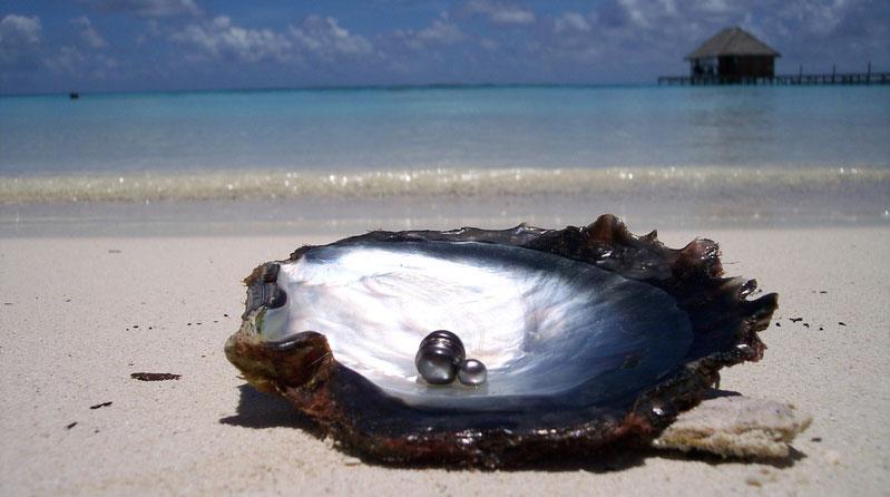 Fakarava la perle des Tuamotu